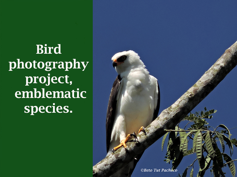 Bird photography project
