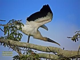 Word Stork-estacion-biologica-las-guacamayas