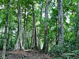 Selva-Parque-Nacional-Laguna-del-Tigre-Guatemala